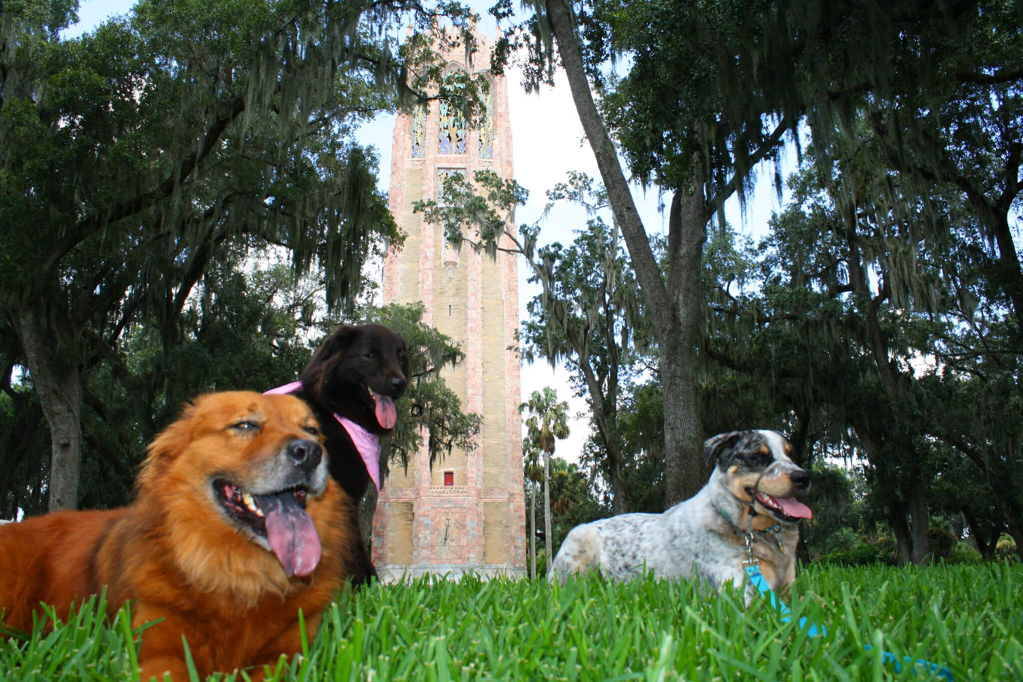 Dogs visiting Bok Tower Gardens during our semi-annual Dog Day! Photo by Stacy Nichols.