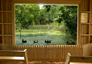 Window by the Pond