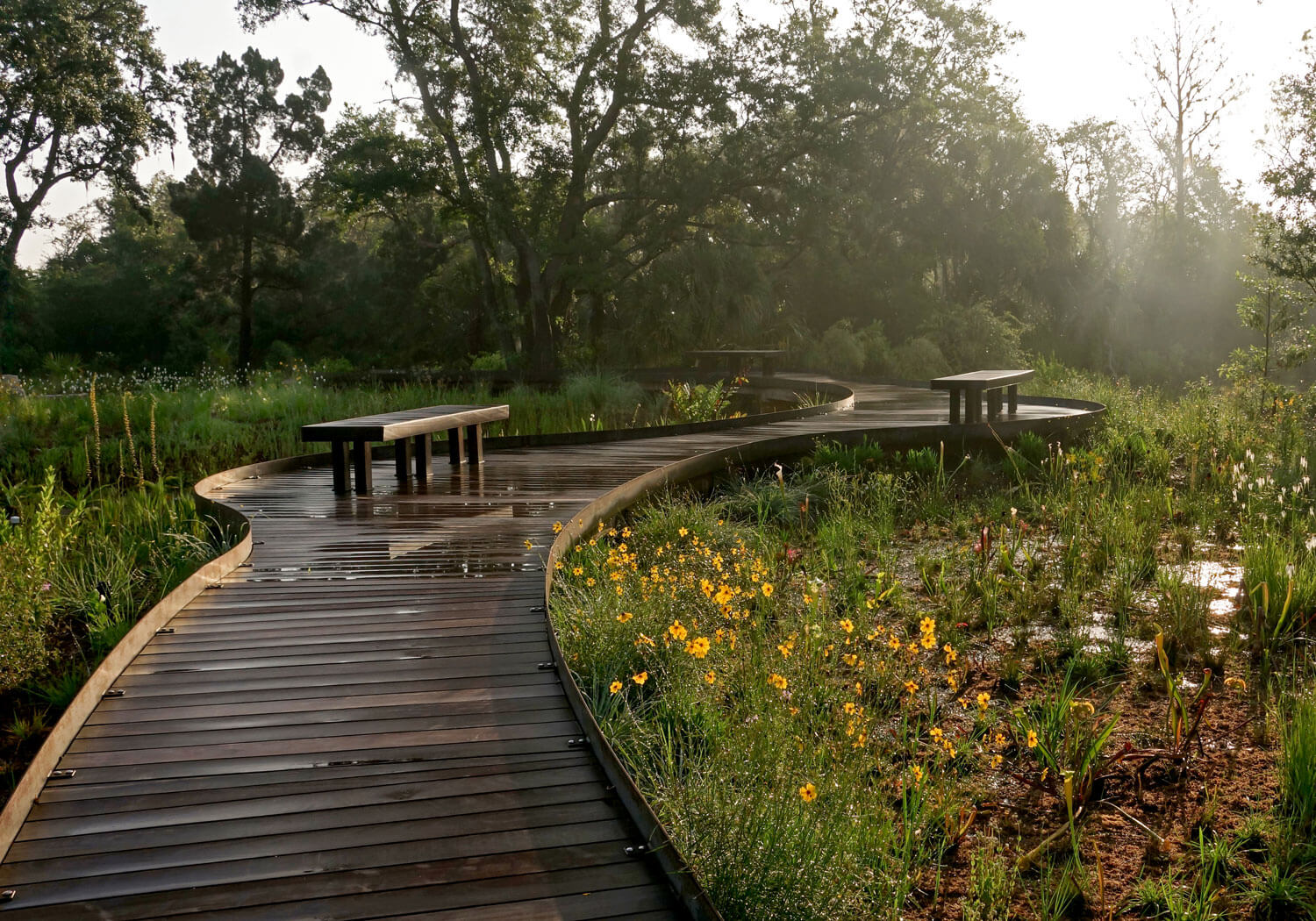 Boardwalk through Wetland and Bog ecosystems overlooking Wildlife Pond